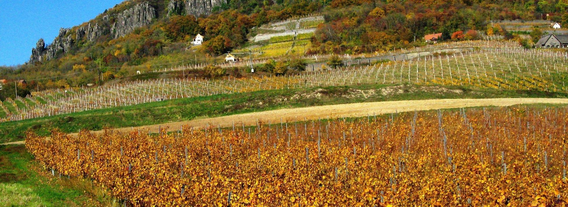 Weingegend bei Ungarn