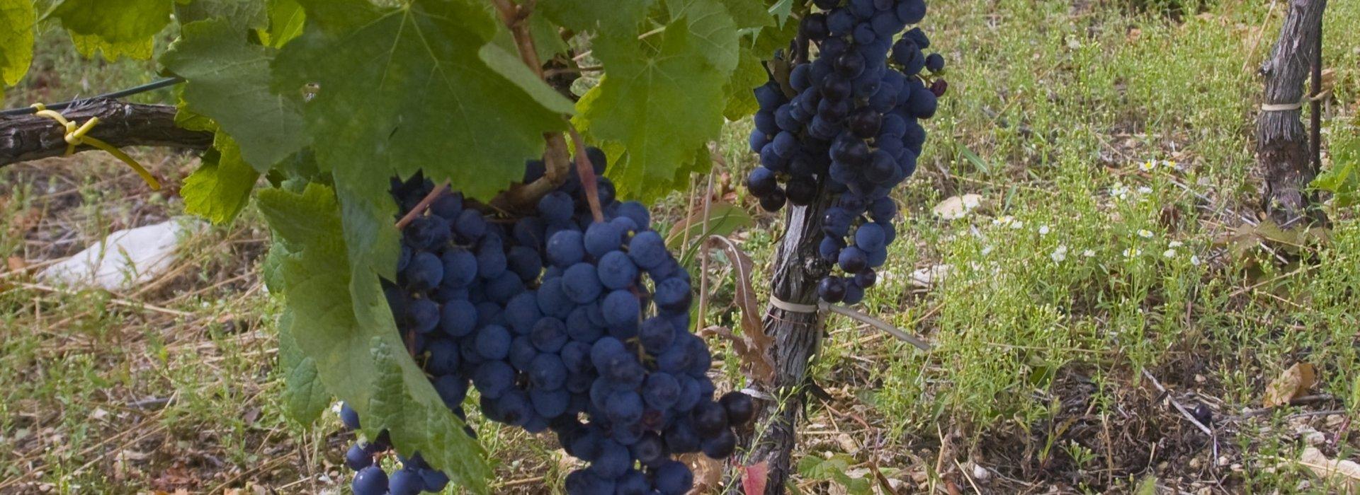 Balatonfüred wine region