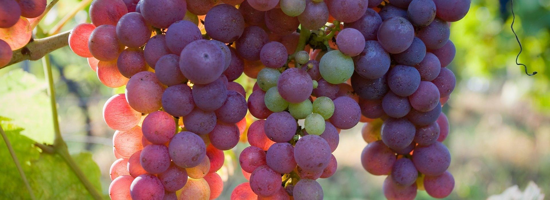 Monarchia Winery